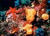 Agia Napa Underwater