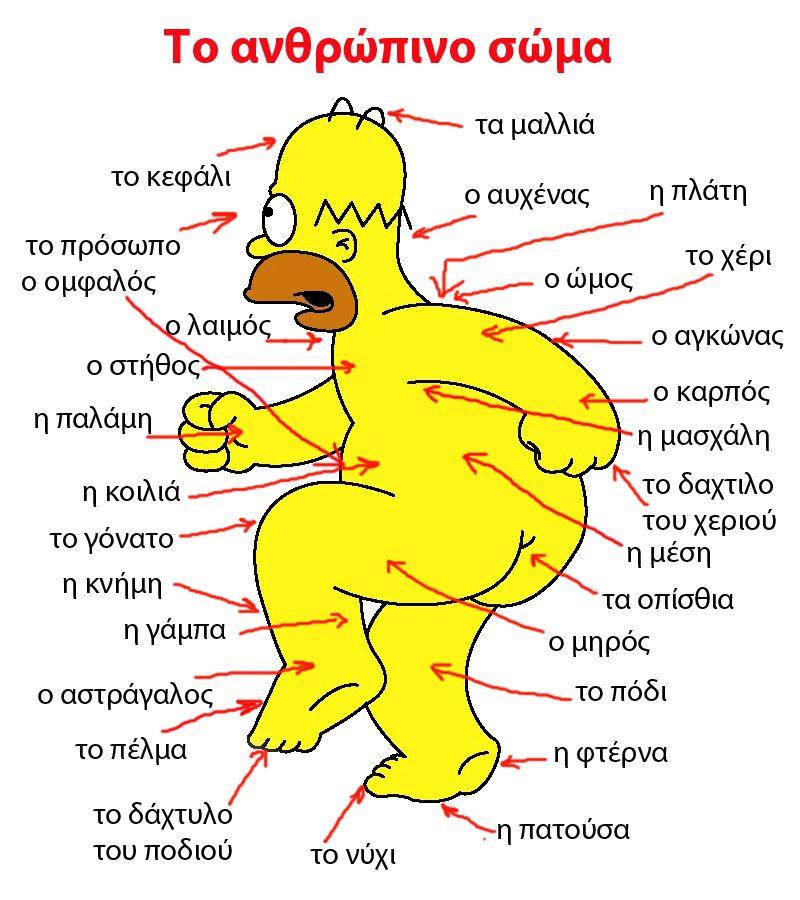 Русско-греческий словарь - Части тела