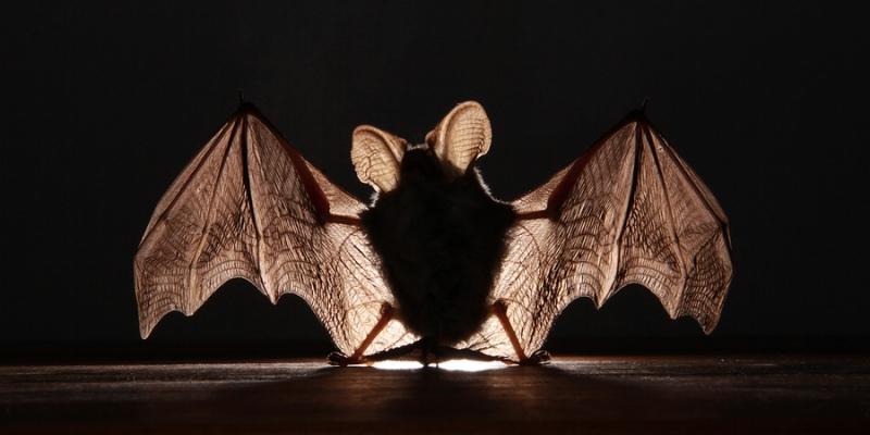 Летучая мышь на фоне света
