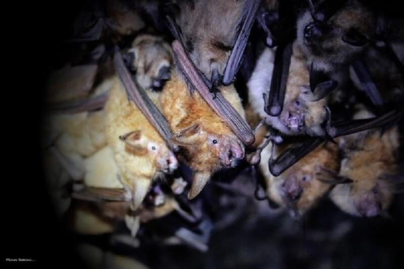 Летучие мыши в тоннеле