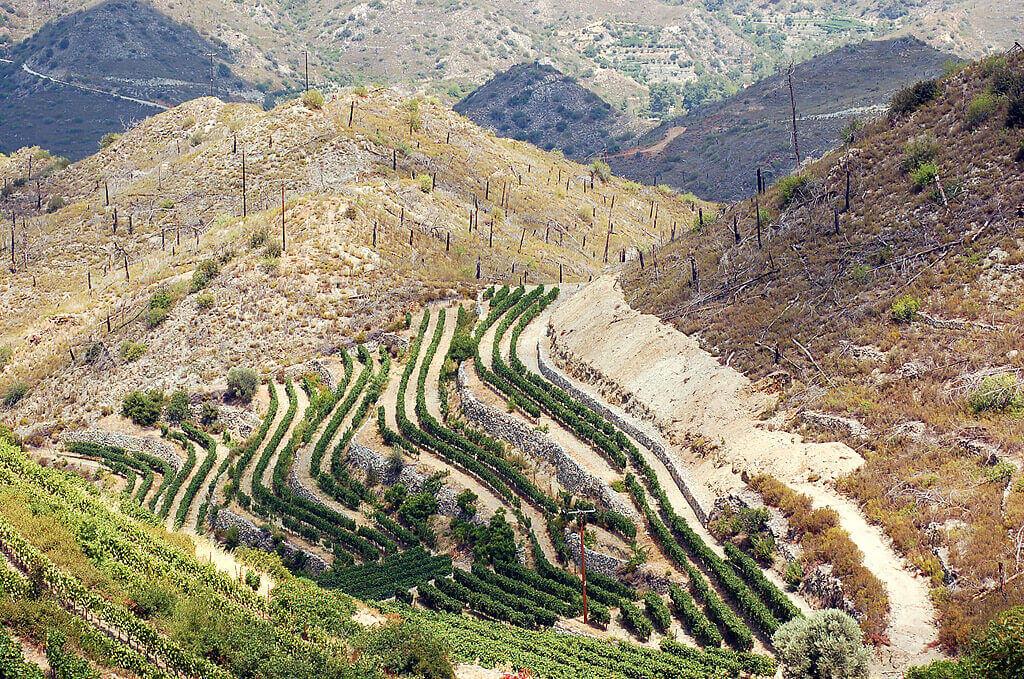 Виноградные поля Тримиклини